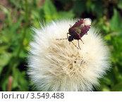 Красный жук. Стоковое фото, фотограф Михаил Дозоров / Фотобанк Лори