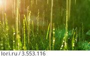Купить «Вечерний сюжет с травой под летним дождем», видеоролик № 3553116, снято 4 сентября 2010 г. (c) ILLYCH / Фотобанк Лори