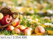 Корзина и с рассыпанные яблоки на траве с осенними листьями. Стоковое фото, фотограф yarruta / Фотобанк Лори