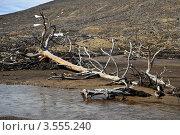 Купить «Мертвое дерево», фото № 3555240, снято 27 мая 2012 г. (c) Валерий Александрович / Фотобанк Лори