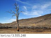 Купить «Безжизненная земля», фото № 3555248, снято 27 мая 2012 г. (c) Валерий Александрович / Фотобанк Лори