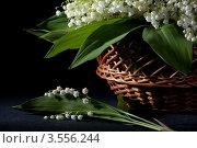 Купить «Веточка ландышей на черном фоне», фото № 3556244, снято 30 мая 2012 г. (c) Ольга Денисова / Фотобанк Лори