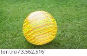 Купить «Большой полосатый мяч катится по траве», видеоролик № 3562516, снято 10 ноября 2009 г. (c) Losevsky Pavel / Фотобанк Лори