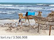 Купить «Верблюд с погонщиком идут вдоль морского побережья», фото № 3566908, снято 1 мая 2012 г. (c) Кекяляйнен Андрей / Фотобанк Лори