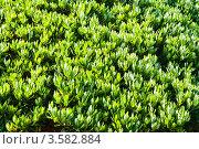 Купить «Фон из зеленых листьев», фото № 3582884, снято 2 мая 2012 г. (c) Юлия Бабкина / Фотобанк Лори