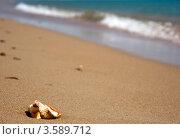 Купить «Ракушка на песке», фото № 3589712, снято 23 апреля 2018 г. (c) SummeRain / Фотобанк Лори