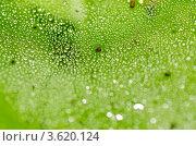 Паутина. Стоковое фото, фотограф Денис Карелин / Фотобанк Лори