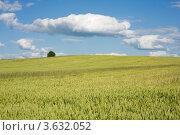 Одинокое дерево в поле. Стоковое фото, фотограф Юрий Горид / Фотобанк Лори