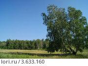Дерево в поле. Стоковое фото, фотограф Ярослав Терентьев / Фотобанк Лори