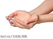 Купить «Руки вверх ладонями на белом фоне», фото № 3636308, снято 18 февраля 2020 г. (c) Сергей Дашкевич / Фотобанк Лори