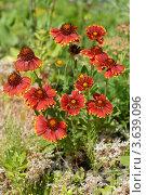 Купить «Летние цветы», эксклюзивное фото № 3639096, снято 1 июля 2012 г. (c) Svet / Фотобанк Лори