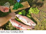 Купить «Приготовление форели на решетке», эксклюзивное фото № 3642064, снято 17 июня 2012 г. (c) Алёшина Оксана / Фотобанк Лори