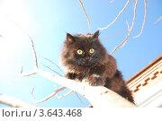 Испуганный кот на дереве. Стоковое фото, фотограф Андрей Дюжечкин / Фотобанк Лори