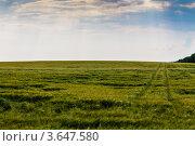 Ячменное поле. Стоковое фото, фотограф Андрей Корж / Фотобанк Лори