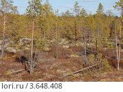 Купить «Тайга в Западной сибири. Весна.», фото № 3648408, снято 17 мая 2012 г. (c) Булат Каримов / Фотобанк Лори