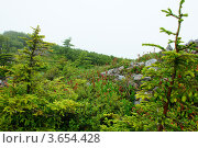На горных гольцах. Стоковое фото, фотограф Евгений Ковешников / Фотобанк Лори