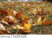 Упавшие листья. Стоковое фото, фотограф Андрей Дюжечкин / Фотобанк Лори