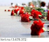 Живые цветы у мемориала. Стоковое фото, фотограф киров николай / Фотобанк Лори