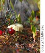 Купить «Северная природа», фото № 3684876, снято 23 августа 2008 г. (c) Ахметсафин Руслан / Фотобанк Лори