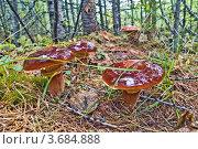 Купить «Фотография северной природы», фото № 3684888, снято 15 августа 2008 г. (c) Ахметсафин Руслан / Фотобанк Лори