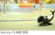 Купить «Надувной кит в аквапарке», видеоролик № 3688308, снято 5 июля 2010 г. (c) Losevsky Pavel / Фотобанк Лори