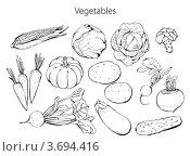 Набор овощей. Рисунок на белом фоне. Стоковая иллюстрация, иллюстратор Малинина Наталья / Фотобанк Лори