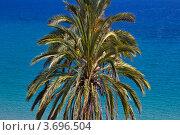 Пальма в Испании (2011 год). Стоковое фото, фотограф Артур Даминов / Фотобанк Лори