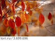 Листья осенние. Стоковое фото, фотограф Наталья Силинская / Фотобанк Лори