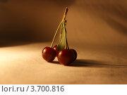 Вишня. Стоковое фото, фотограф Марина Пыхова / Фотобанк Лори