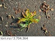 Листья на асфальте. Стоковое фото, фотограф Денис Омельченко / Фотобанк Лори