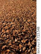 Купить «Коричневые чешуйки от еловых шишек», фото № 3723548, снято 27 декабря 2011 г. (c) Morgenstjerne / Фотобанк Лори