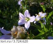 Купить «Цветы Кавказа», фото № 3724620, снято 24 июля 2009 г. (c) Игорь Чернышов / Фотобанк Лори