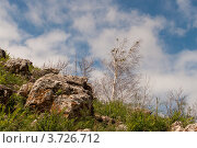 Камень и береза. Стоковое фото, фотограф Андрей Бекетов / Фотобанк Лори