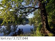Дерево над прудом. Стоковое фото, фотограф Коршунов Владимир / Фотобанк Лори