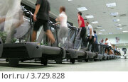 Купить «Люди бегут на беговым дорожкам в спортзале (таймлапс)», видеоролик № 3729828, снято 17 декабря 2010 г. (c) Losevsky Pavel / Фотобанк Лори