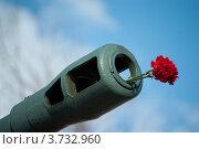 Купить «Красные гвоздики в пушечном стволе», фото № 3732960, снято 9 мая 2012 г. (c) Сурикова Ирина / Фотобанк Лори