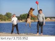 Купить «Беременная женщина с мужем играют с собакой на берегу», фото № 3733952, снято 3 мая 2012 г. (c) Ольга Дмитриева / Фотобанк Лори