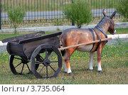 Запряженный в тележку ослик. Стоковое фото, фотограф Воробьев Валерий / Фотобанк Лори