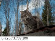 Купить «Кот сидит на крышке», фото № 3738200, снято 8 мая 2011 г. (c) Сурикова Ирина / Фотобанк Лори