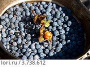 Купить «Котелок с лесными ягодами», фото № 3738612, снято 3 августа 2012 г. (c) Вячеслав Беляев / Фотобанк Лори