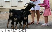 Купить «Мама с детьми кормят козу и козлят на улице», видеоролик № 3740472, снято 3 августа 2011 г. (c) Losevsky Pavel / Фотобанк Лори