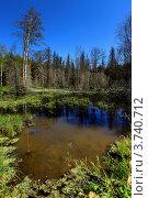 Пейзаж болота в лесу. Стоковое фото, фотограф Алексей Макшаков / Фотобанк Лори