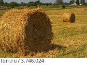 Тюки (валки) соломы на скошенном поле. Стоковое фото, фотограф Александр Кондрушенко / Фотобанк Лори