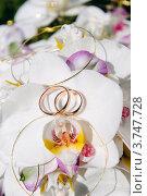 Обручальные кольца на орхидеях. Стоковое фото, фотограф Алексей Казнадей / Фотобанк Лори