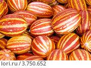 Купить «Маленькие декоративные дыни», фото № 3750652, снято 10 августа 2012 г. (c) Юрий Плющев / Фотобанк Лори