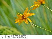 Цветок. Стоковое фото, фотограф Кортелева Мария / Фотобанк Лори