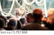 Купить «Люди смотрят на младенца орангутанга, висящего на веревке в зоопарке», видеоролик № 3757868, снято 10 ноября 2011 г. (c) Losevsky Pavel / Фотобанк Лори