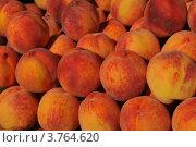 Купить «Фон спелых персиков», фото № 3764620, снято 22 июля 2012 г. (c) Игорь Архипов / Фотобанк Лори