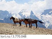Купить «Лошади на вершине горы, Домбай», фото № 3770048, снято 9 августа 2012 г. (c) Истомина Елена / Фотобанк Лори