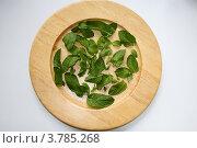 Мята на деревянном блюде. Стоковое фото, фотограф Anna Abramovich / Фотобанк Лори